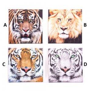 Lienzo fotoimpresión de tigres o leones. Cuatro modelos. (40 x 40 x 1.8 cm)
