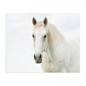 Box fotoimpresión on canvas, model horse white