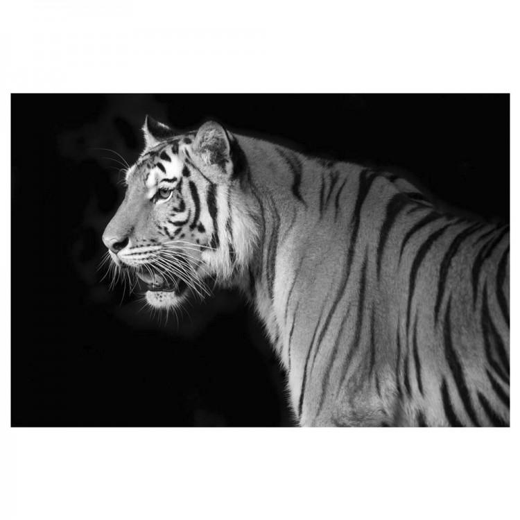 Cuadro decorativo para salón de un tigre en blanco y negro Hogar y  mas