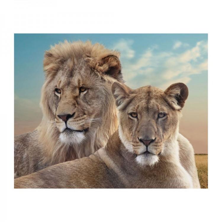 Cuadro en lienzo de Leones en fotoimpresión DIseño Salvaje y Natural Hogar y mas