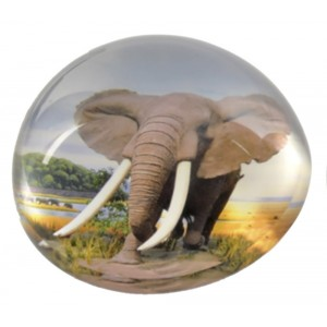 Paperweight Glass, with the shape of a Dome. Design of Wild Animals, with style Jungle/Safari (8cm X 4cm) - Home and More